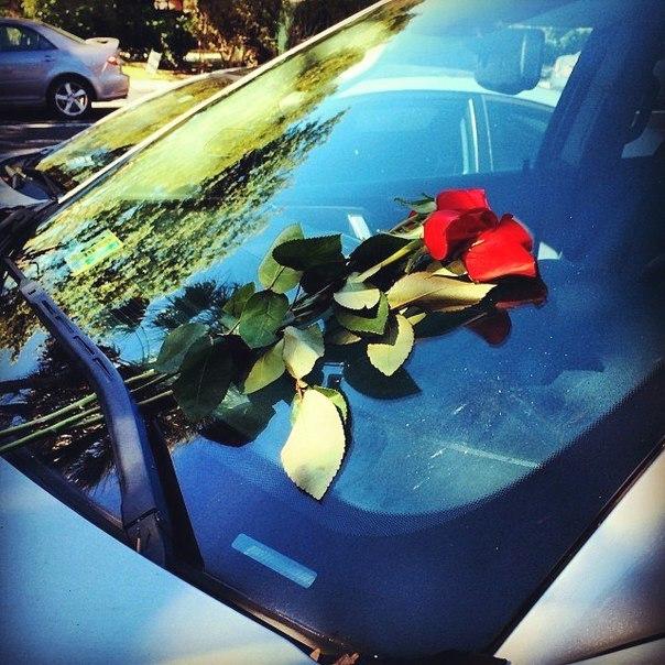 Цветок на стекле машины что это такое